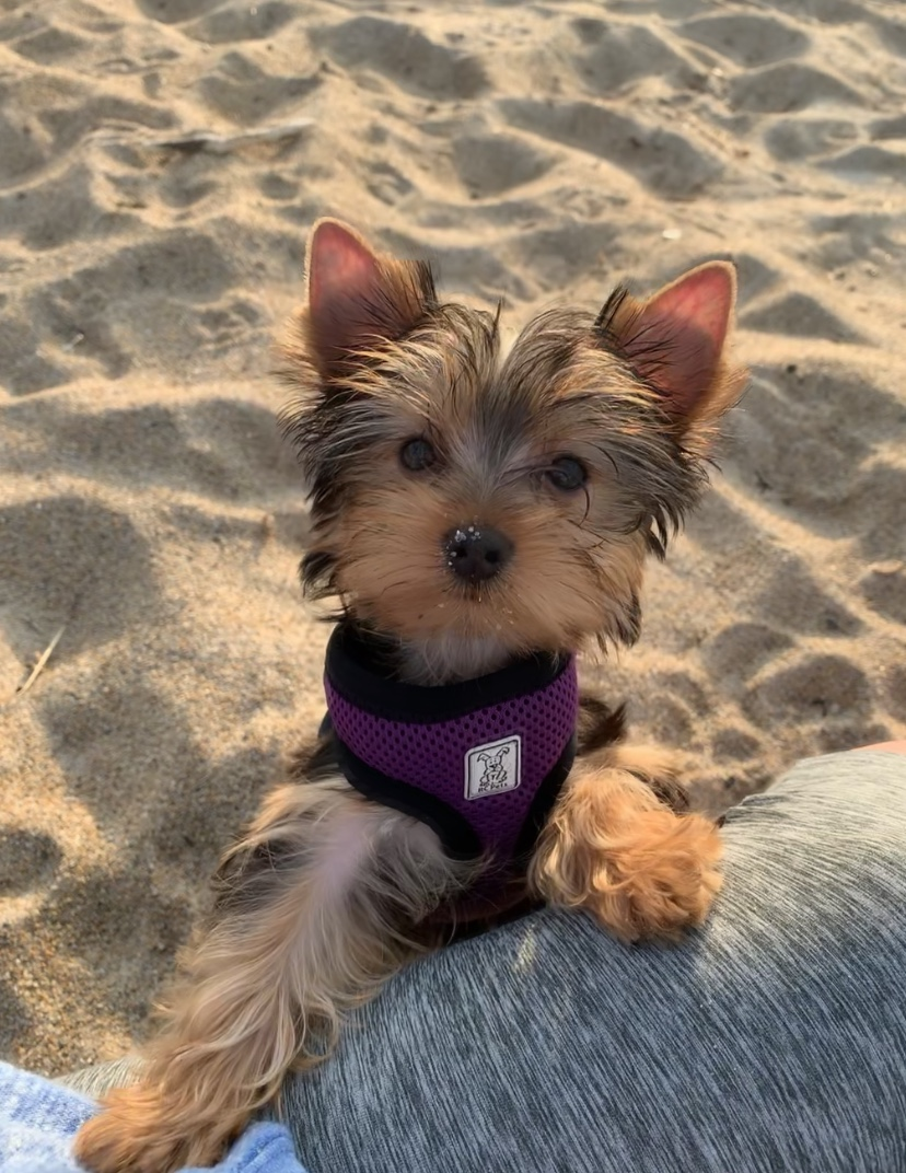 Ivy at the beach