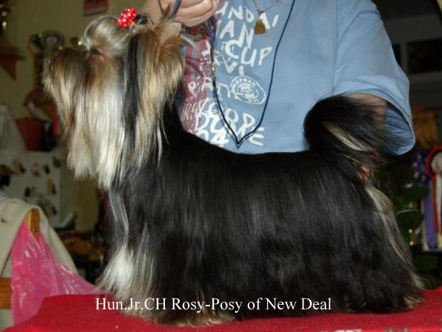 JCH Rosy-Posy of New Deal