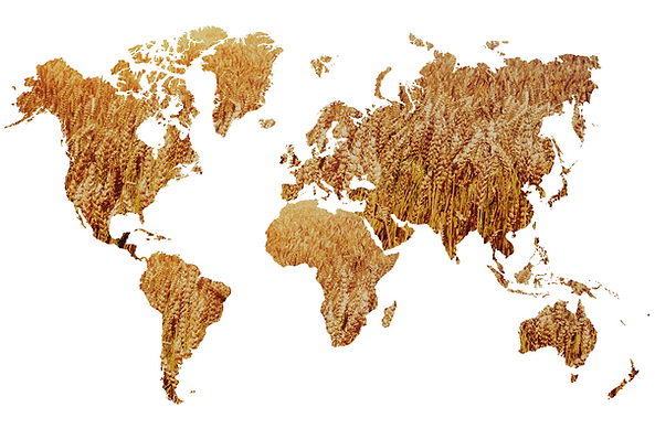 wheat world map.png