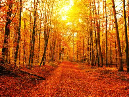 Odio l'estate, Amo l'autunno