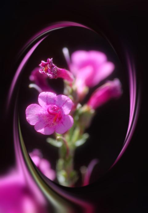 Flower favorite