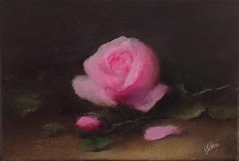 Pink Rose & Pink Peonies Study