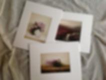 Judith-Levin-Small-Prints