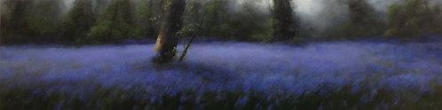 Bluebell Wood, Panoramic: 16 x 60 ins
