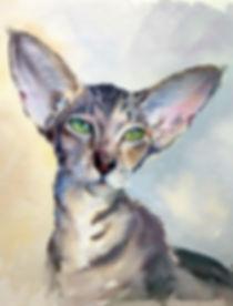 Елена Сергеевна Кайнова сотрудничает с питомниками Ориентальных кошек