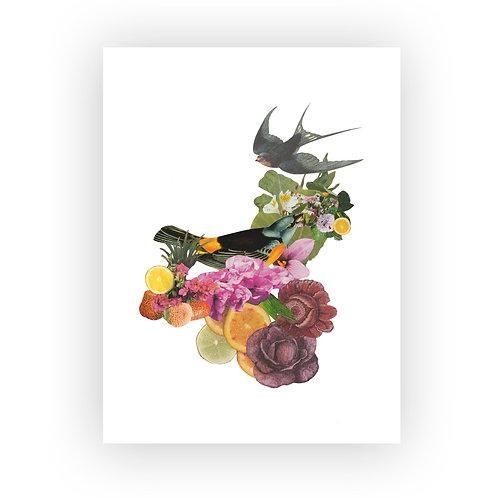 Pájaros botánicos