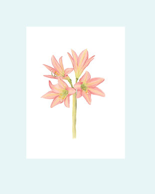 disponibles_flores2.jpg