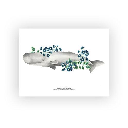 Cachalote botánico