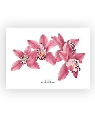 botanico#4.jpg