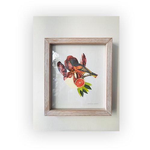 Pájaros botánicos #1