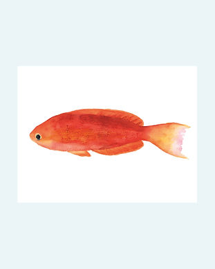 peces2.jpg