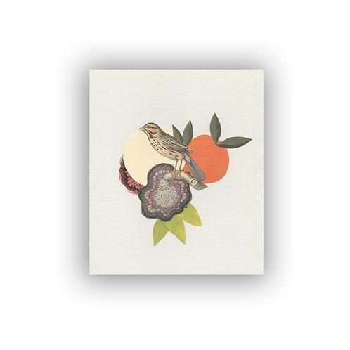 Pájaros botánicos #3