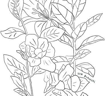 dibujo_botanico1.jpg