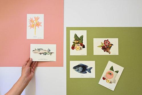 Pack 5 postales
