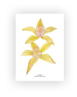botanico#3.jpg