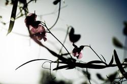 Flower005