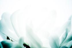 Floral Closeup2