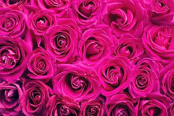 pink-roses-2249403_1920.jpg