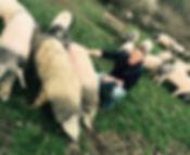Schweine Karcher