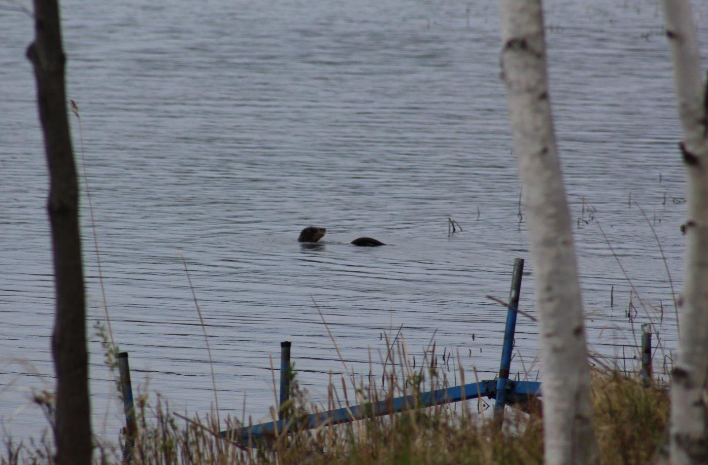 Wildlife: Otter