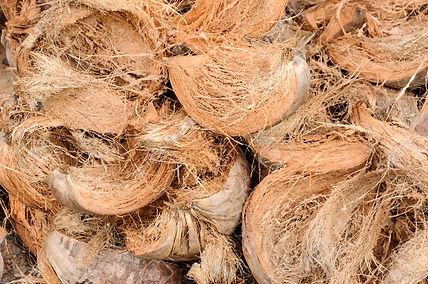 coconut-coir.jpg
