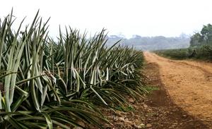 UNDP Costa Rica