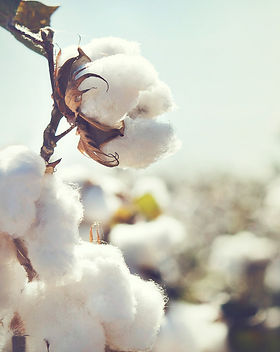 Australian Cotton_RawAssembly_Full Circl