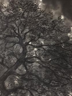 Oak in the night