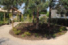 Bernherd Baron Cottage Homes gardens.jpg