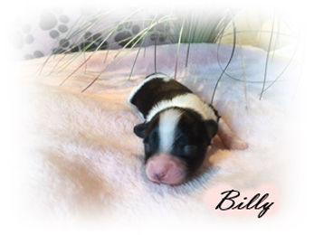 Billy 2.JPG