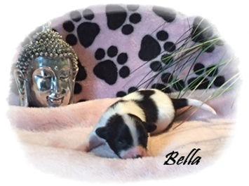 Bella177.JPG