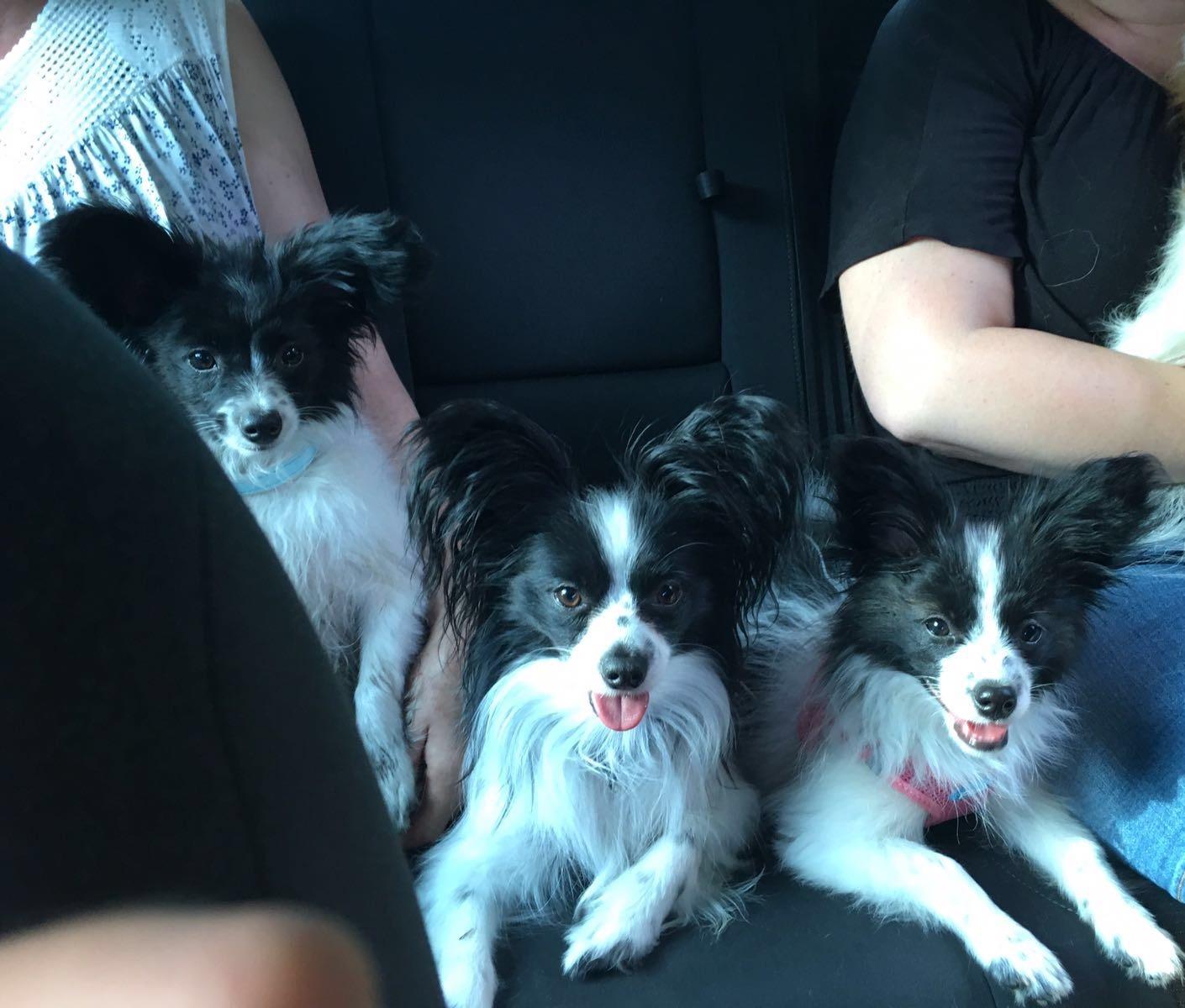 Ariba mit Mama Hope und Amy