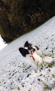 Alice im Schnee??