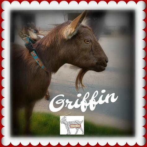Goat News