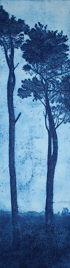 """St Michael's Pines, Blue 1"""