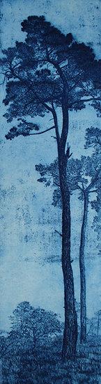 """St Michael's Pines, Blue 2"""