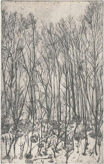 """""""Glenshee Trees"""""""