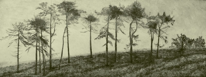 """Windswept Trees"""