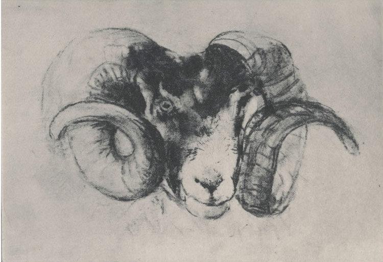 """""""Ram"""""""