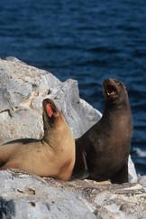 2008 Galápagos