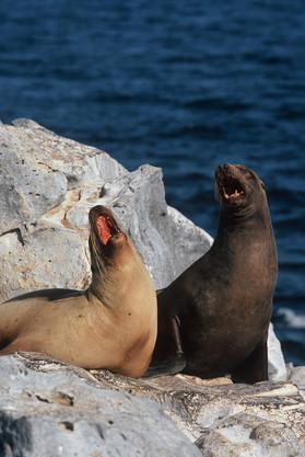 2007 Galápagos