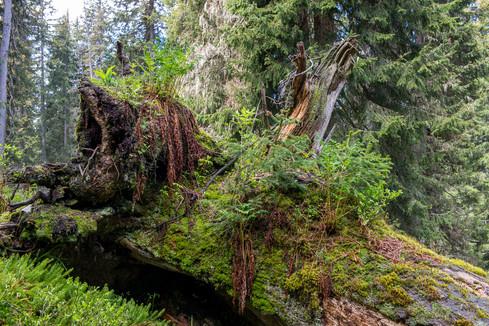 boedmerenwald-63.jpg