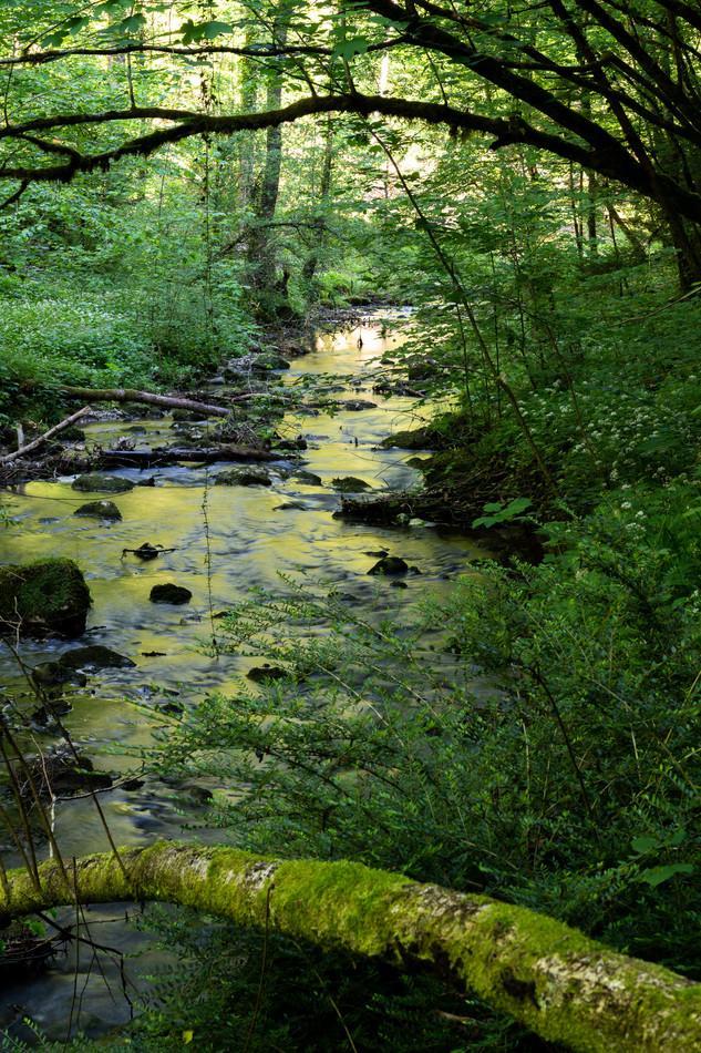 chaltbrunnental_200519-37.jpg