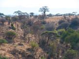 2011 Safari in Tansania