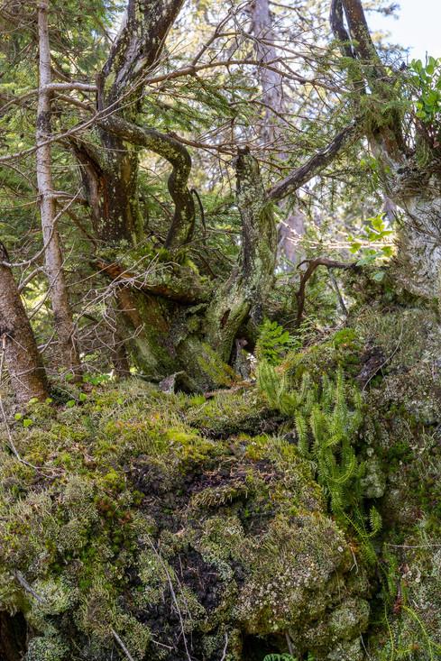 boedmerenwald-59.jpg