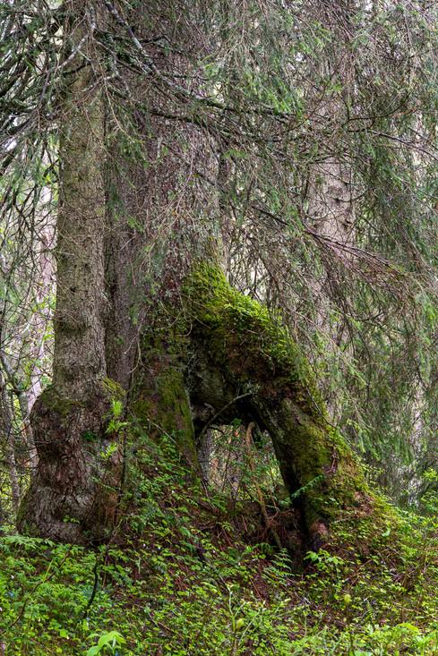 boedmerenwald-2.jpg