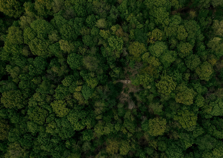 forest-top-view-green-trees-loneliness-c