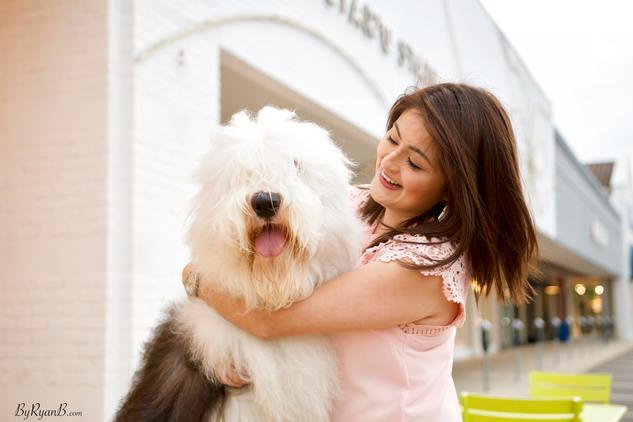 old english sheepdog, dog, altar'd state, winston, houston