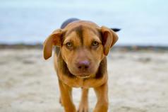 belize, dog, puppy, cute