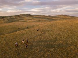 Six Conservation Strategies